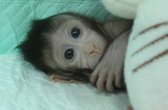 World first cloned monkeys born in China