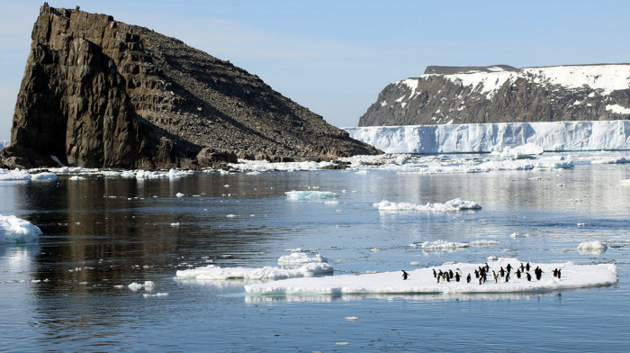 Found: A Secret Penguin Supercolony in Antarctica's Danger Islands