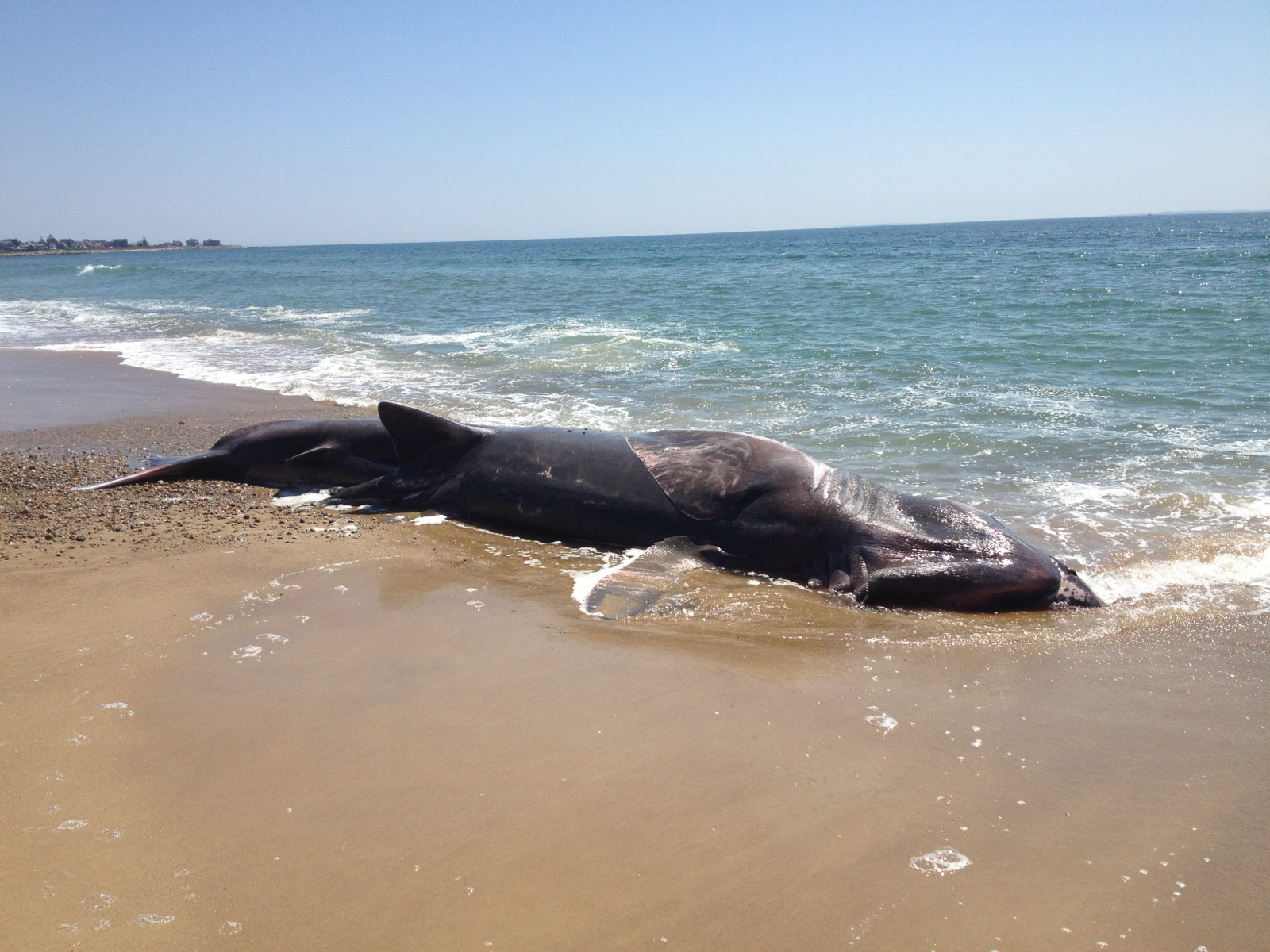 Mysterious sea creature washes ashore in St. Simons Island