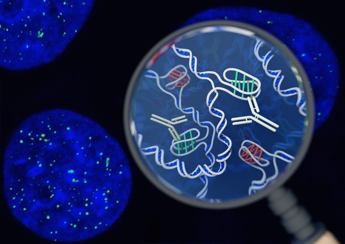 Found: a new form of DNA in our cells