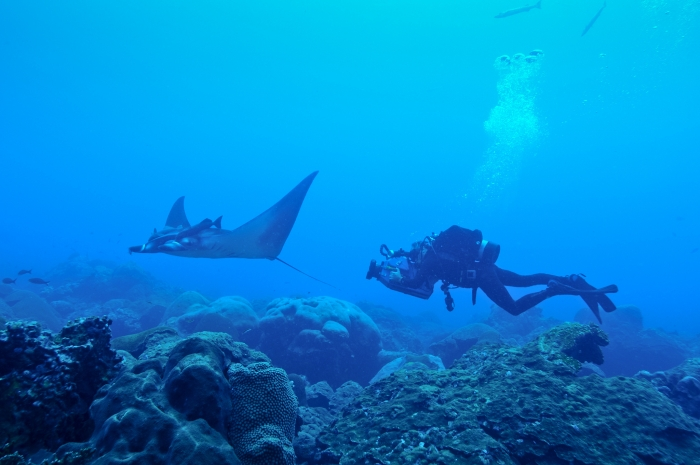 Scientists discover world's first known manta ray nursery
