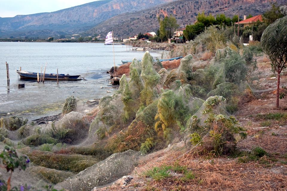 Spiders have blanketed a Greek lagoon in 300-meter cobwebs