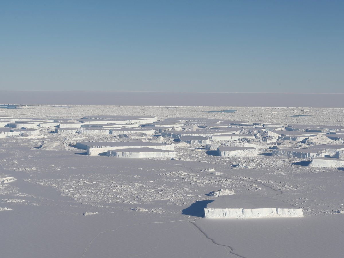 Rare rectangular icebergs spotted by Nasa in Antarctica are for real