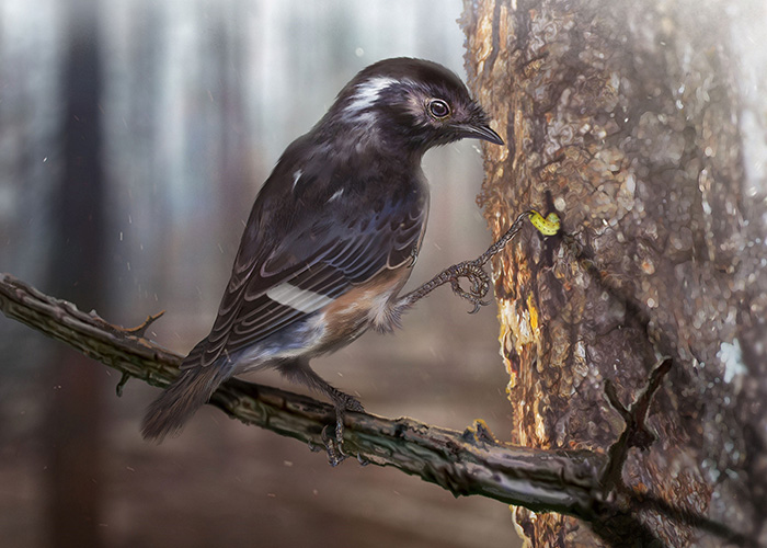 This ancient bird sported a ginormous toe