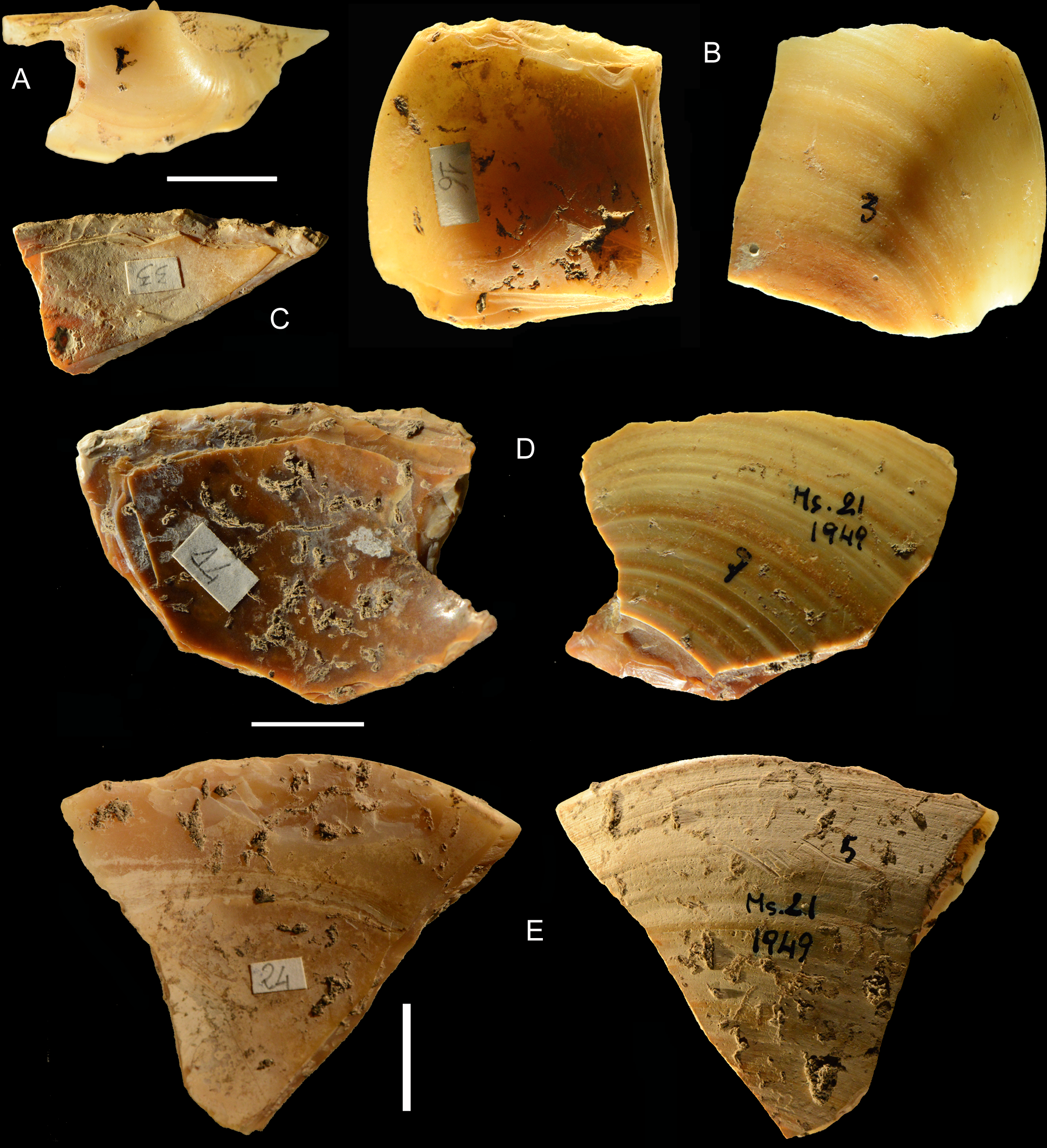 Neanderthals Dived into Mediterranean Sea for Clam Shells | Archaeology