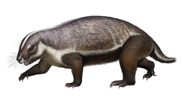 Scientists discover fossil of massive rodent-like animal called 'crazy beast'