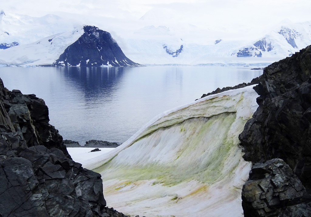 Global warming is causing parts of Antarctica to turn green