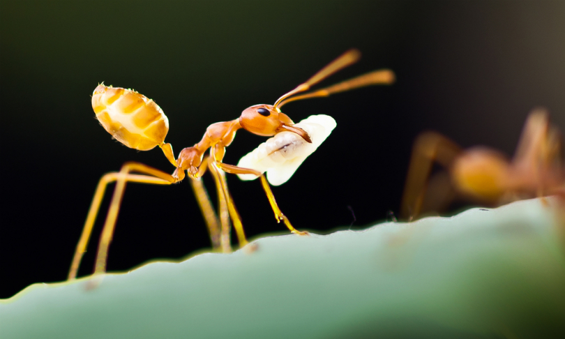 Worker ant-ics could lead us to search and rescue robots