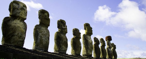 Sweet potatoes suggest Easter Island had more people than previously thought
