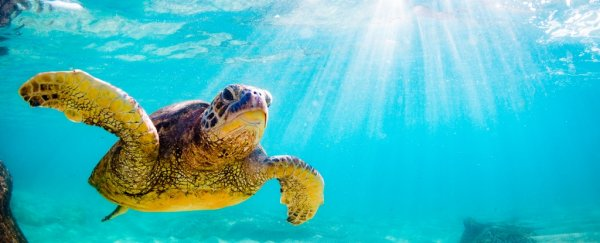 Sea turtles are coming back from the brink of extinction, well done everybody